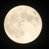 満月の夜に出産が多いってホント…?満月と出産の不思議な関係