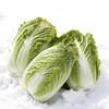離乳食に白菜はいつから使えるの?離乳食初期・中期・後期の時期別のおすすめレシピ7選