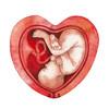 胎盤の機能と構造は?胎盤が完成するとどうなる?