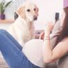 子供がいても飼いやすいおすすめの人気ペット5選 犬や猫、うさぎ、ハムスター、金魚など