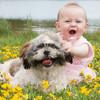 赤ちゃんと犬は一緒に暮らしても大丈夫?アレルギーの心配は?
