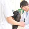 小児がかかる急性虫垂炎(盲腸)の原因・症状・治療の解説