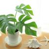 100均でインテリア!100均観葉植物で魅せるおしゃれなお部屋15選♡