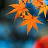 京都の紅葉の見ごろはいつ?名所から穴場までおすすめの紅葉スポット紹介!