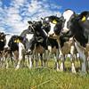 りんどう湖ファミリー牧場へ行こう!乳牛の乳しぼり体験が魅力☆