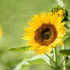 今年の夏は黄色で決めよう!派手になり過ぎない黄色ママコーデ紹介