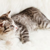 ウイルス感染トキソプラズマを回避すべく猫との生活!