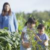 子供と一緒に家庭菜園!なすの育て方