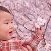 お花見手土産にはスイーツを♡洋菓子から和菓子までおすすめ10選