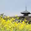 子連れで初詣に行こう!奈良でオススメの初詣スポットを紹介