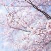 春だ!桜だ!お出かけしよう!首都圏のオススメお花見スポット5選♪♪