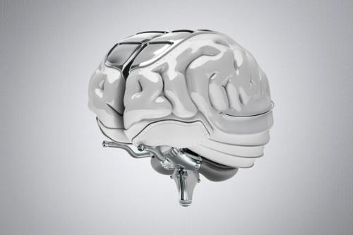 間脳と脳下垂体