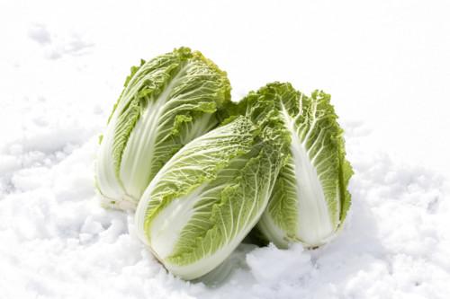 離乳食で使う白菜は冷凍保存できる?