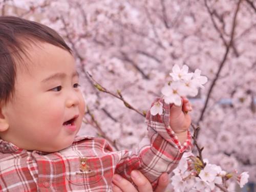 桜 赤ちゃん